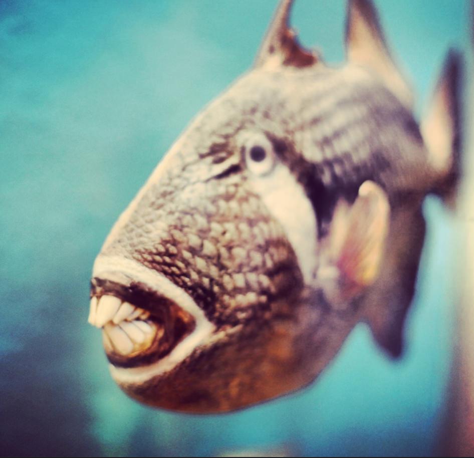 Lachende Tiere | Trift über Lachende Fische