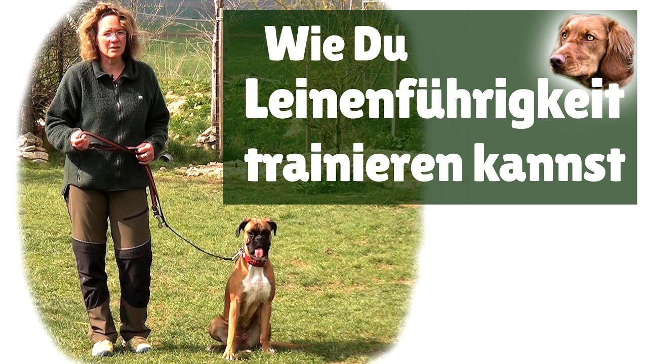 Leinenführigkeit ► Hilfe Mein Hund Zieht An Der Leine ! Leinenführigkeit  Trainieren bei Hund Zieht Stark An Der Leine Was Tun