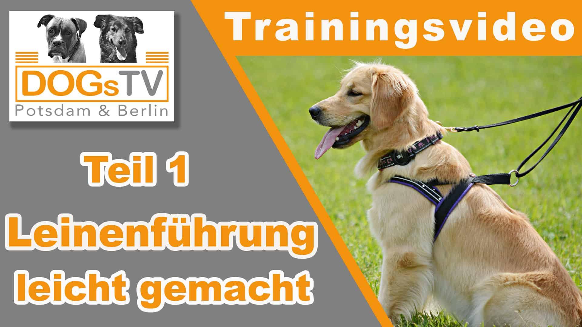 Leinenführigkeit Trainieren - Nur Eine Methode Mit Erfolg innen Hund Zieht Stark An Der Leine Was Tun