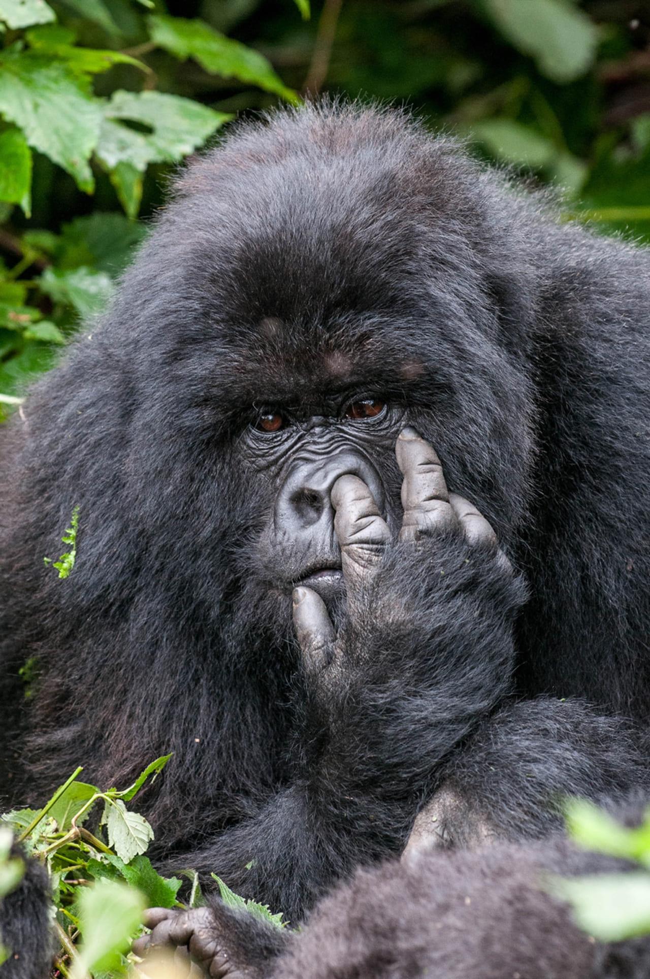 Lustige Bilder Von Tieren. 200 Kostenlose Fotos innen Lustige Tierbilder Kostenlos