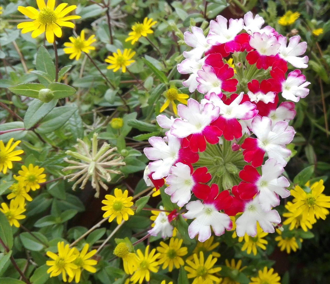 Lustige Blumen - Beet, Grün, Rosa, Pink Von Brigitte Schäfer für Lustige Blumenbilder