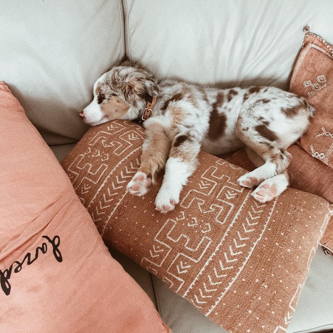 Lustige Tierbilder Hunde Kostenlos Herunterladen | Bilder verwandt mit Lustige Tierbilder Kostenlos