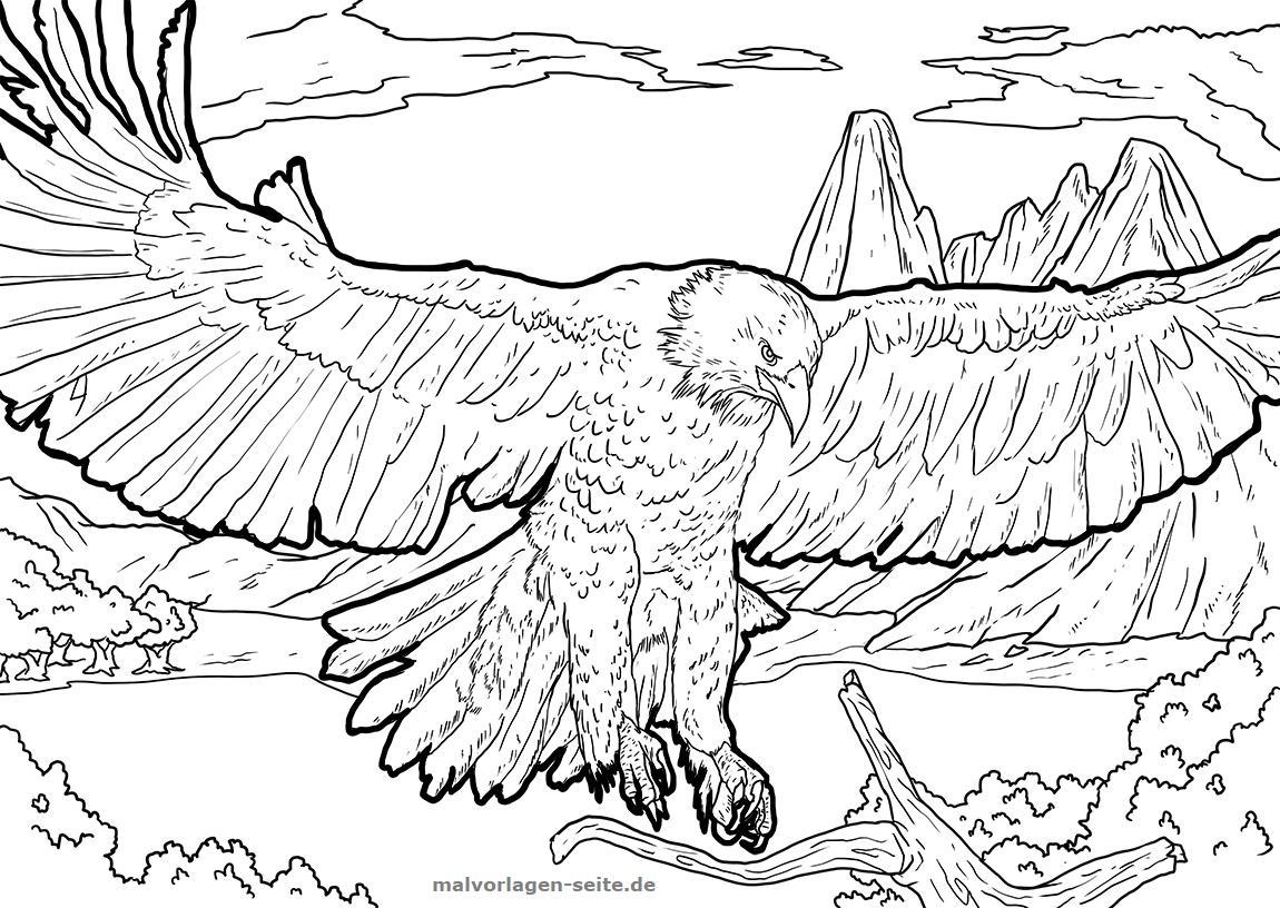 Malvorlage Adler | Tiere - Ausmalbilder Kostenlos Herunterladen verwandt mit Ausmalbilder Adler