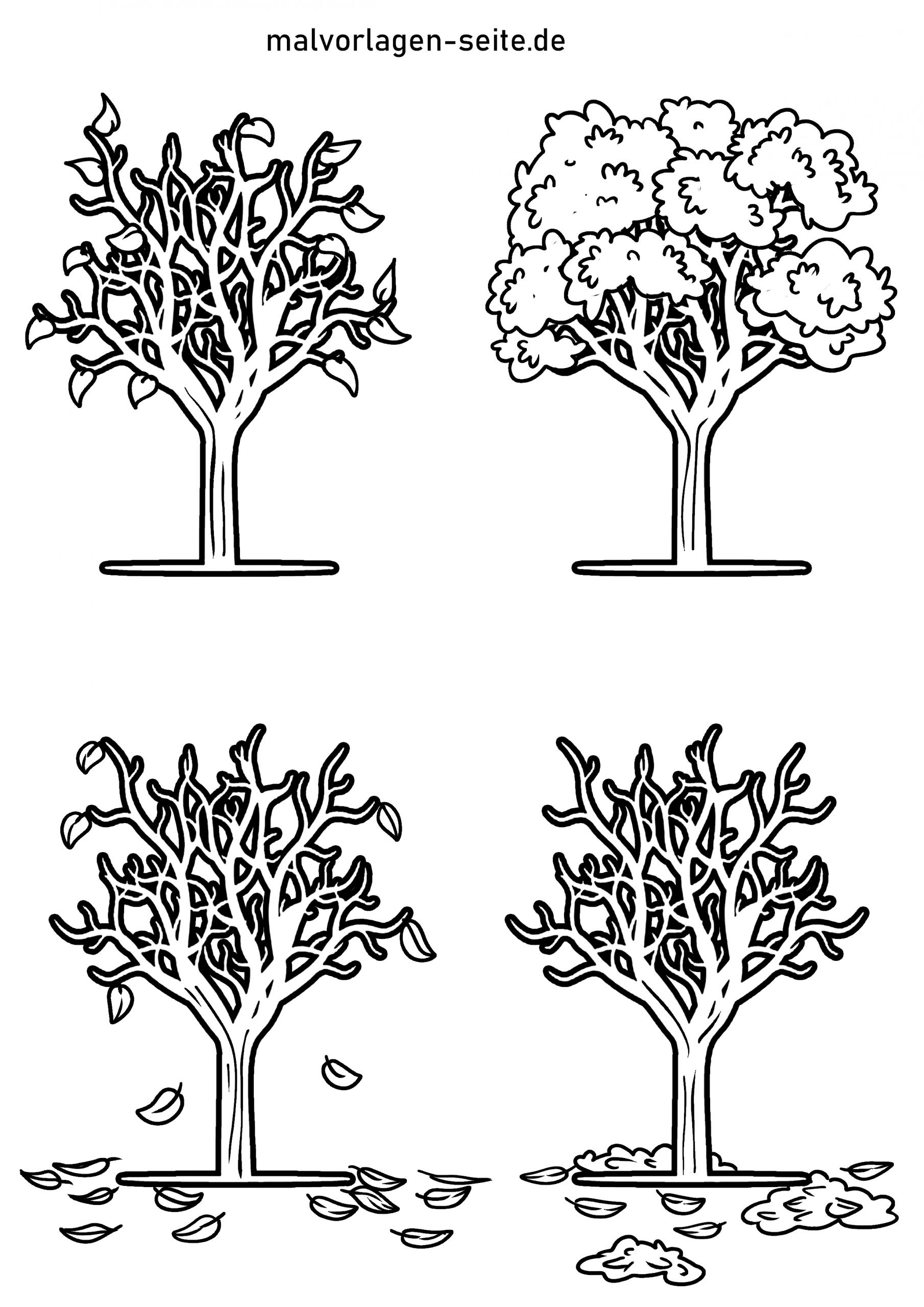 Malvorlage Baum 4 Jahreszeiten | Pflanzen - Ausmalbilder bestimmt für Malvorlagen Baum
