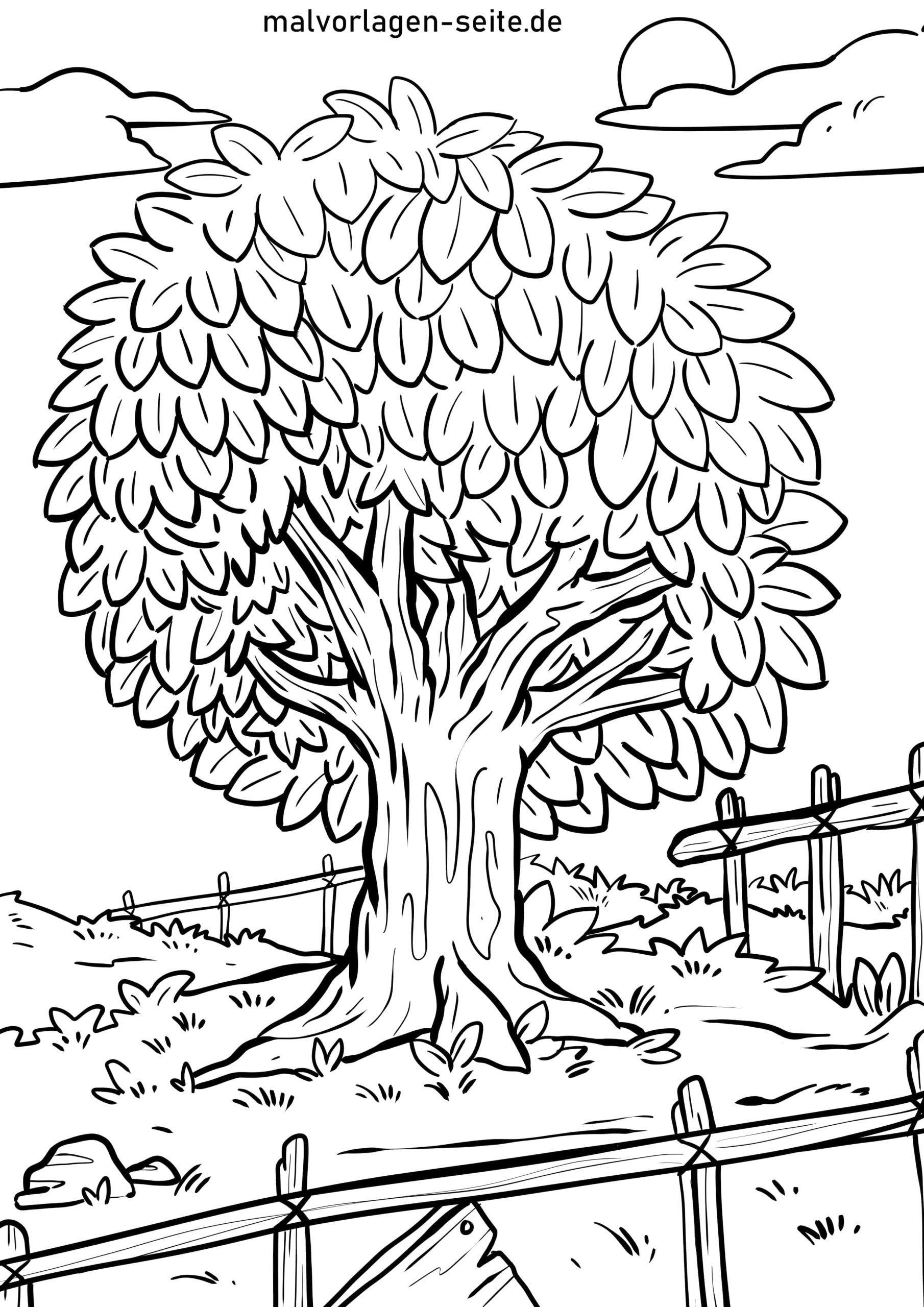 Malvorlage Baum - Ausmalbilder Kostenlos Herunterladen verwandt mit Malvorlagen Baum