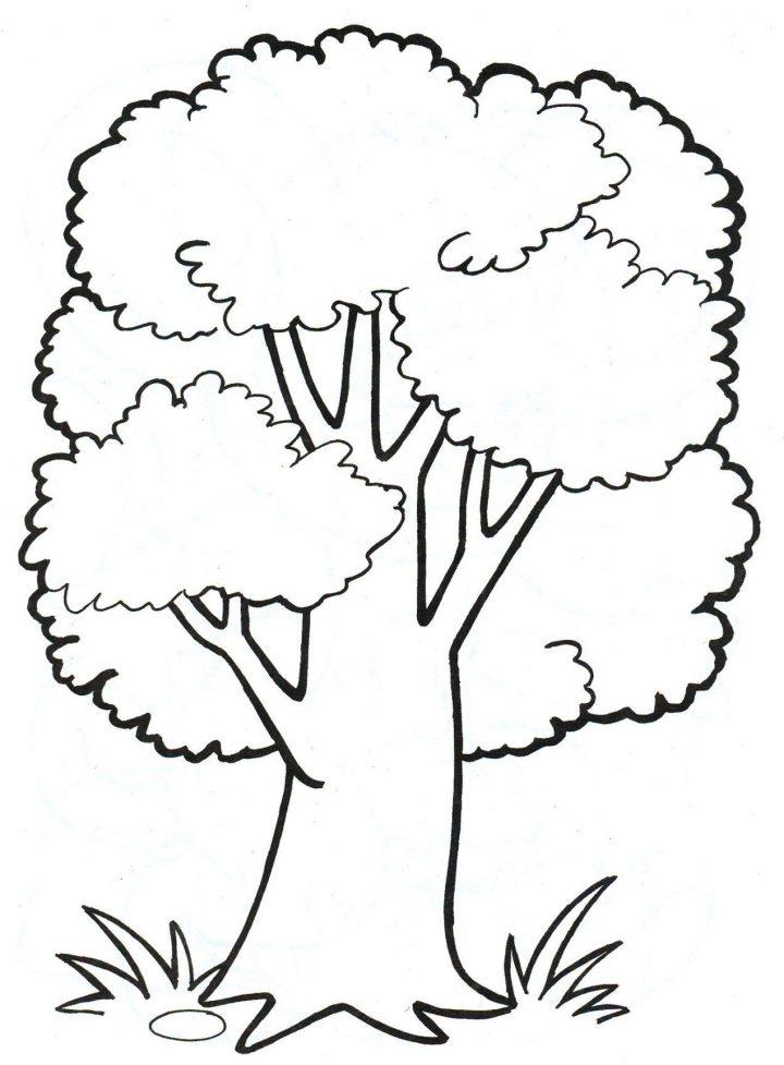 malvorlage baum kostenlos | baum zeichnung, baummalerei