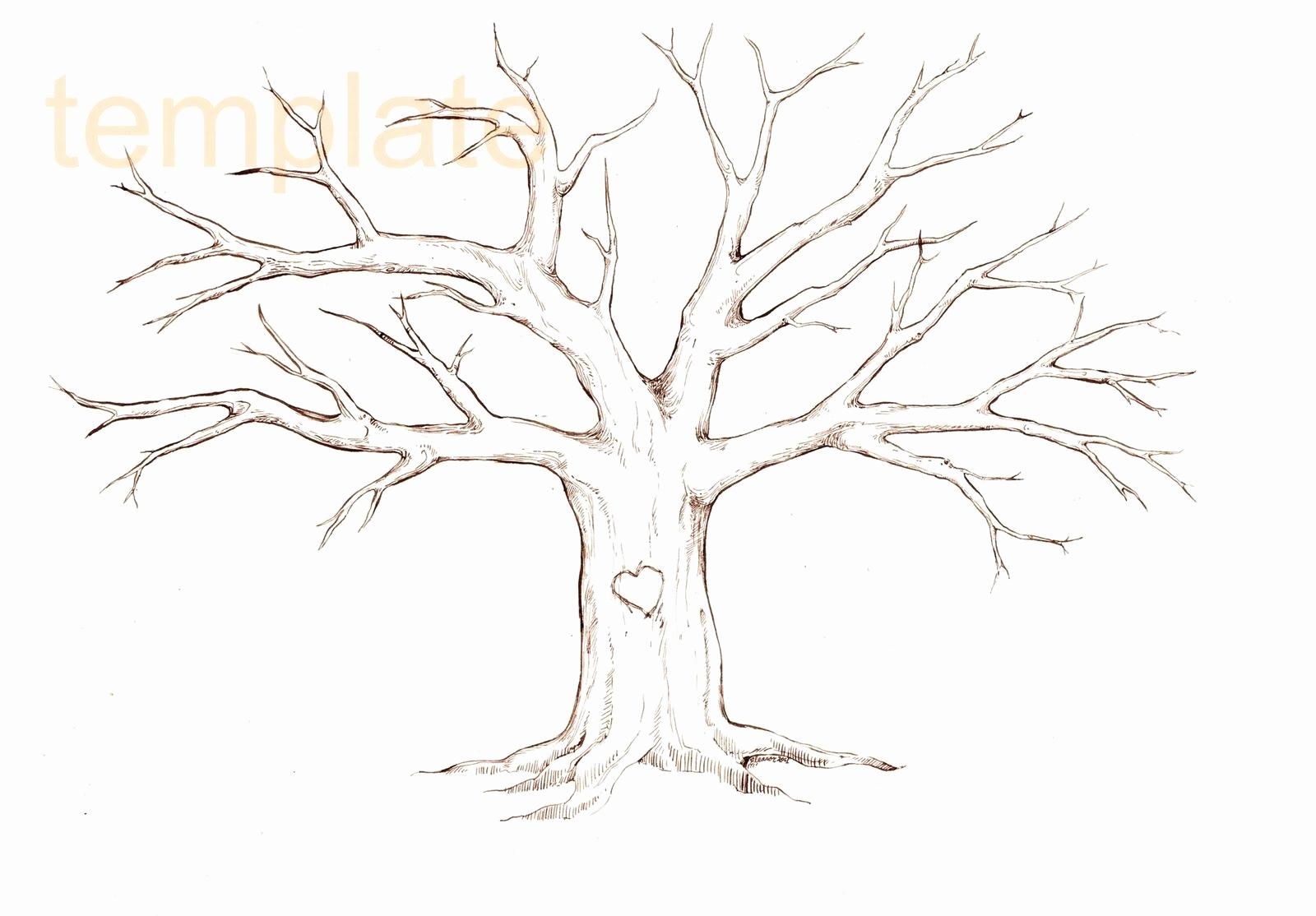 Malvorlage Baum Mit Ästen Genial Baum Malvorlagen Kostenlos in Malvorlage Baum Mit Ästen