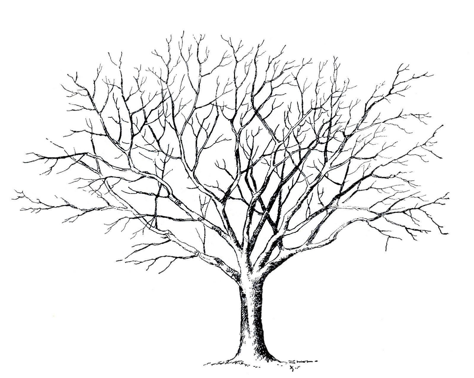 Malvorlage Baum Ohne Blätter (Mit Bildern) | Baum Zeichnung bei Malvorlage Baum Mit Ästen