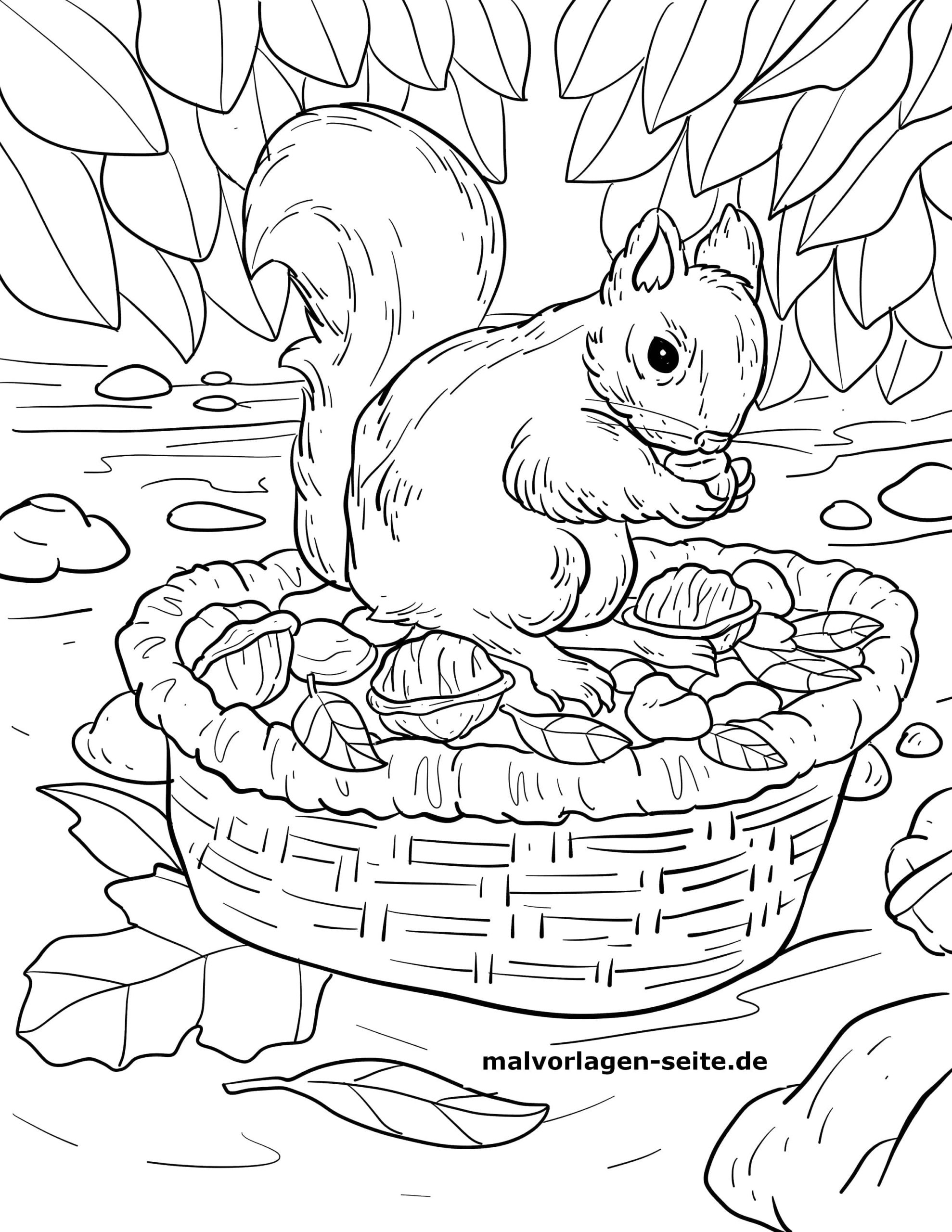 Malvorlage Eichhörnchen Futtersuche Herbst - Ausmalbilder innen Eichhörnchen Zum Ausmalen