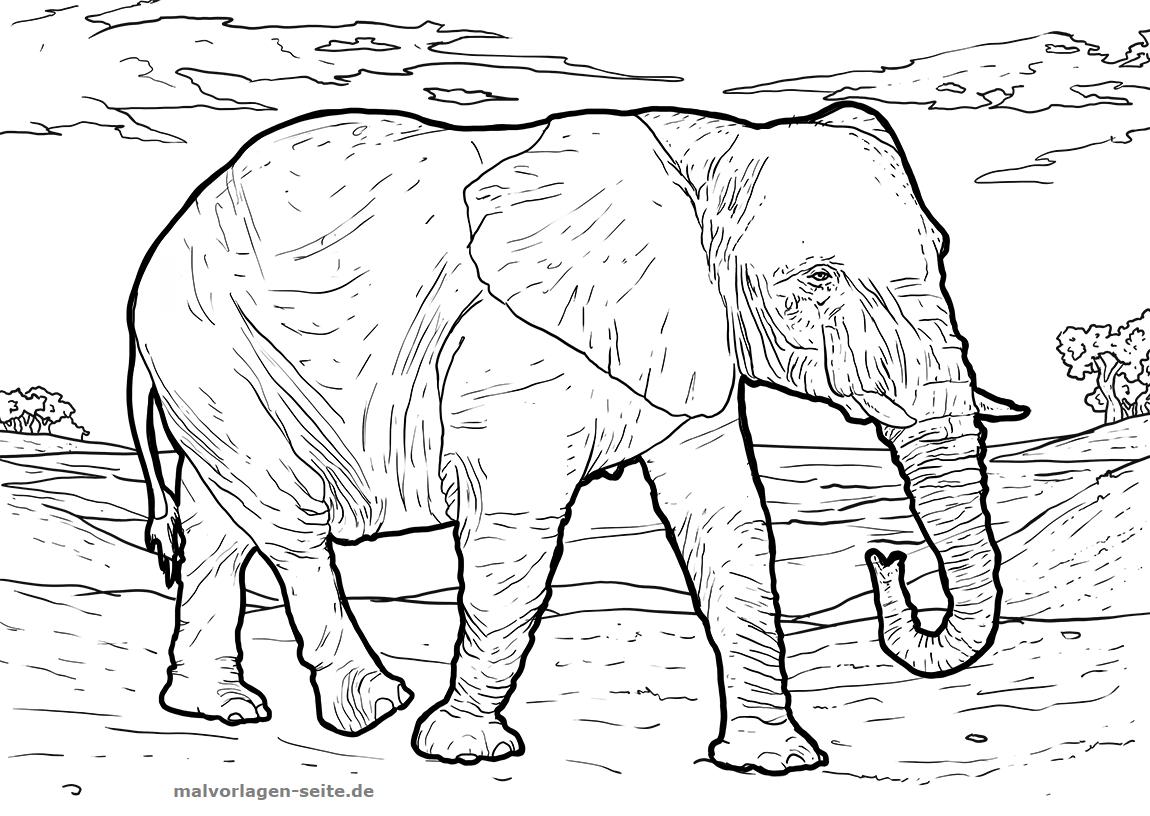Malvorlage Elefant | Tiere - Ausmalbilder Kostenlos für Elefanten Malvorlagen