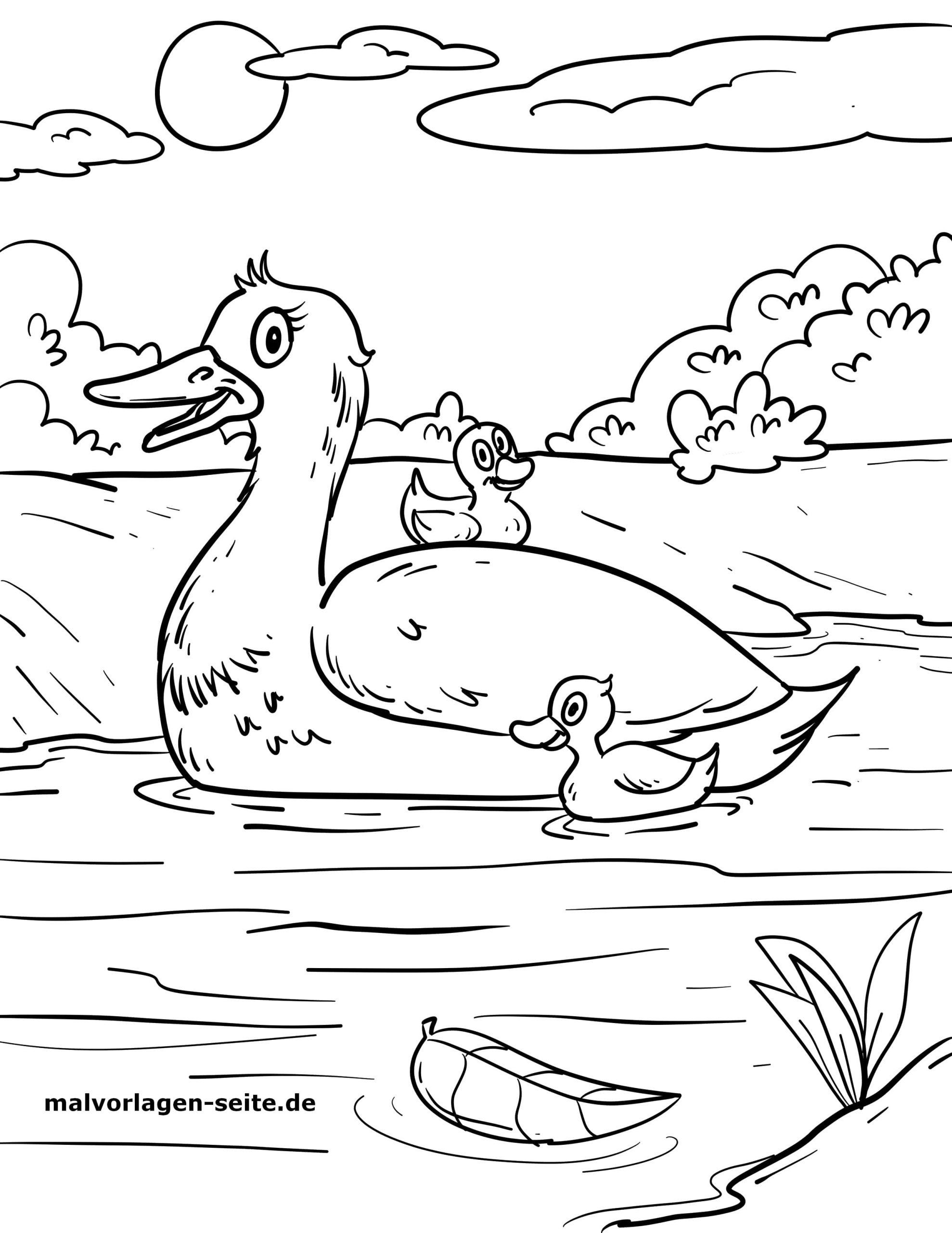 Malvorlage Enten | Vögel Tiere - Ausmalbilder Kostenlos bestimmt für Ausmalbilder Ente