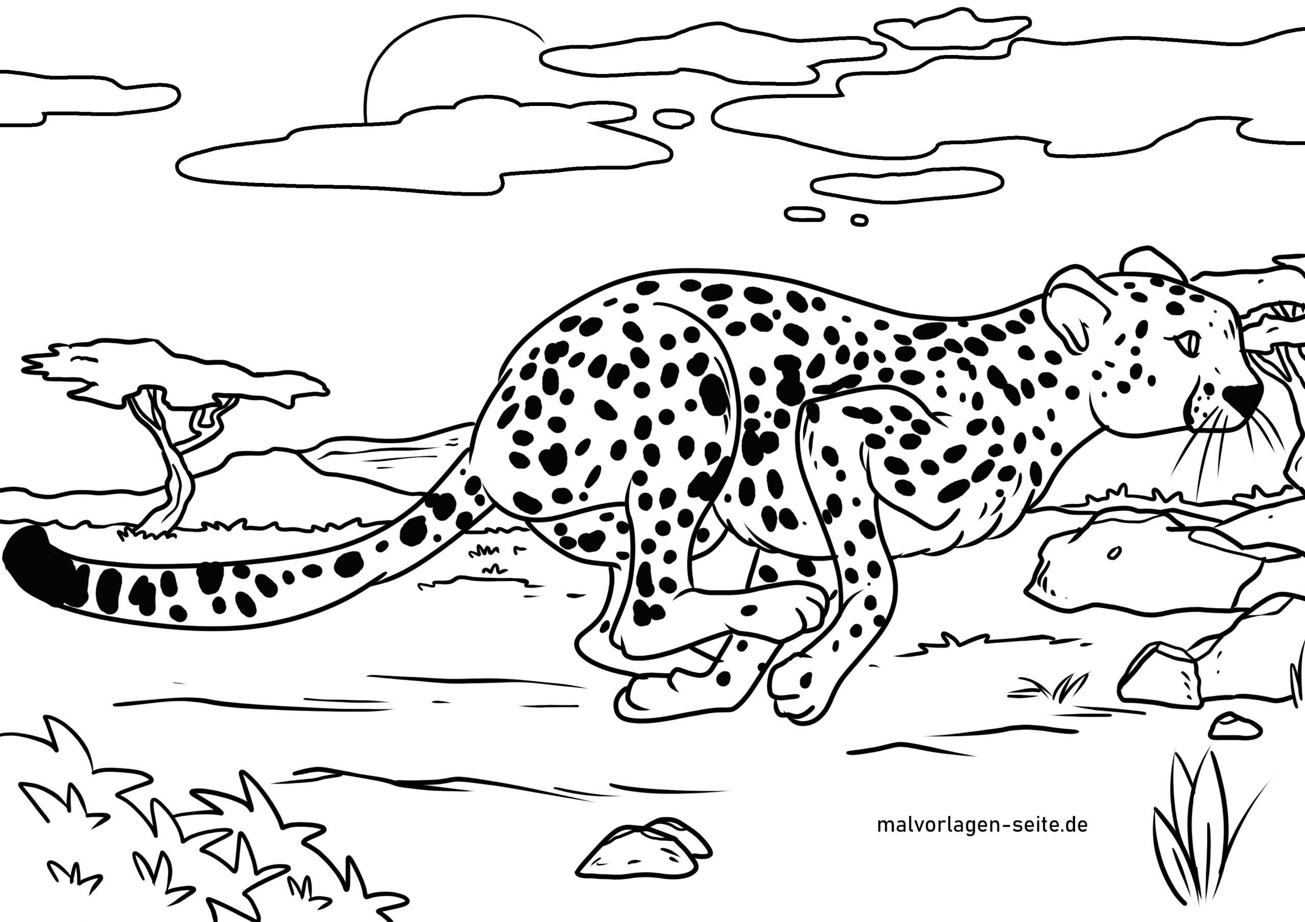 Malvorlage Gepard | Tiere - Ausmalbilder Kostenlos Herunterladen bestimmt für Malvorlagen Kostenlos Tiere