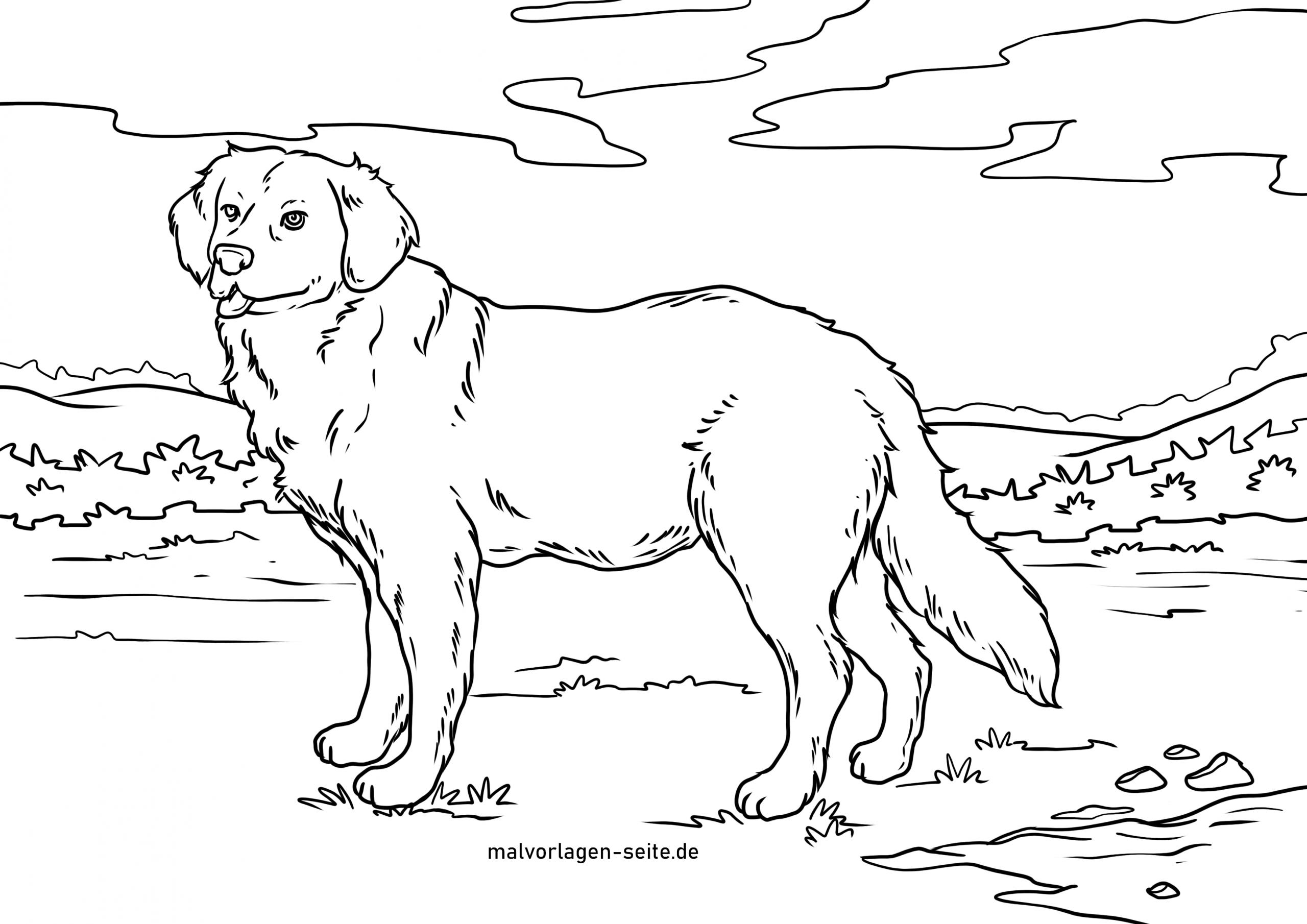 Malvorlage Golden Retriever   Hunde - Ausmalbilder Kostenlos ganzes Malvorlagen Hunde