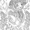 Malvorlage Koala Für Erwachsene - Ausmalbilder Kostenlos für Ausmalbilder Kostenlos Für Erwachsene