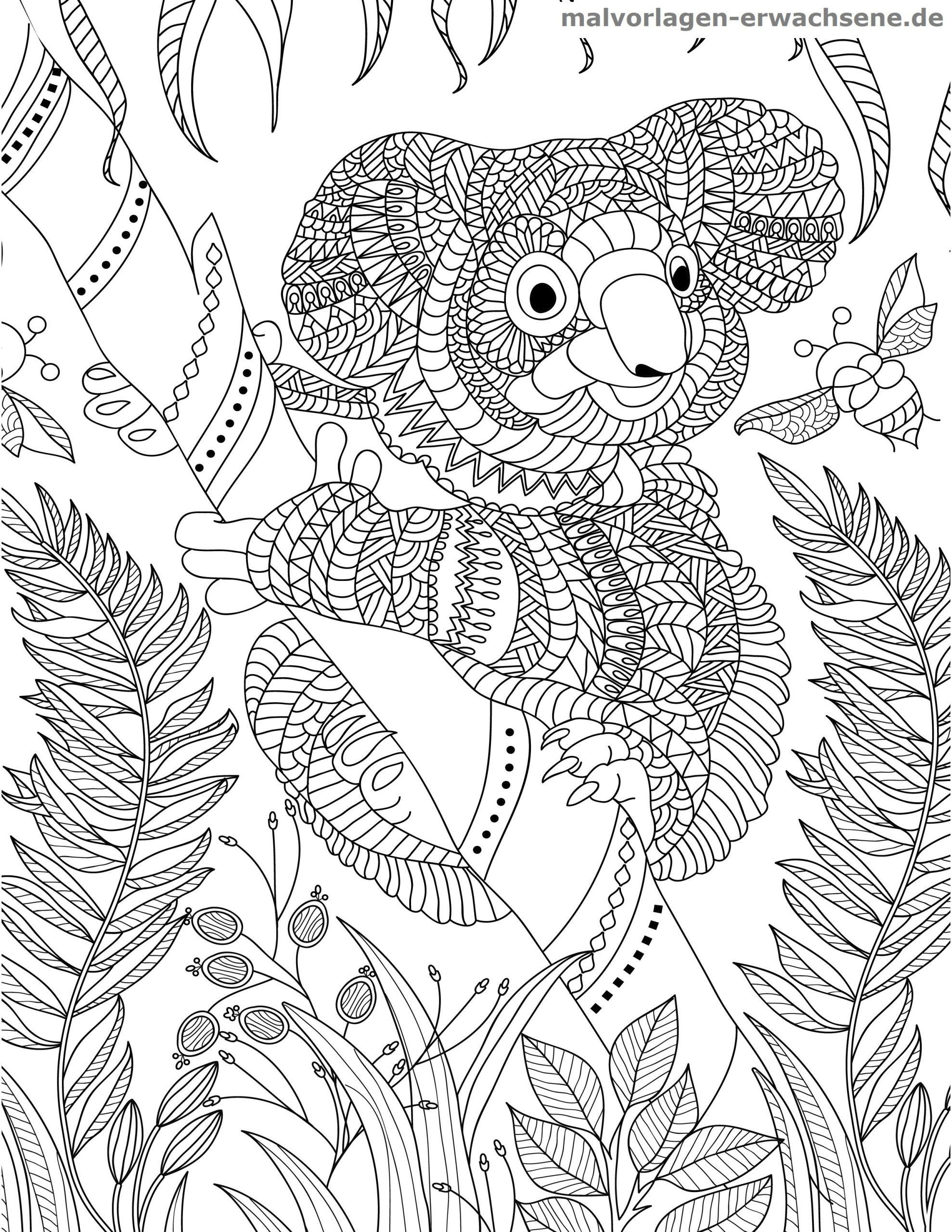 Malvorlage Koala Für Erwachsene - Ausmalbilder Kostenlos verwandt mit Koala Ausmalbild