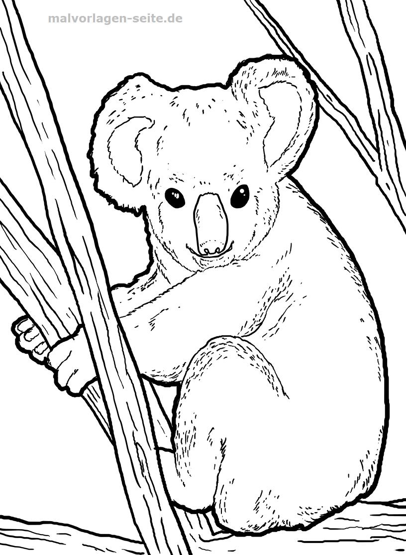 Malvorlage Koala | Tiere - Ausmalbilder Kostenlos Herunterladen innen Malvorlage Koala