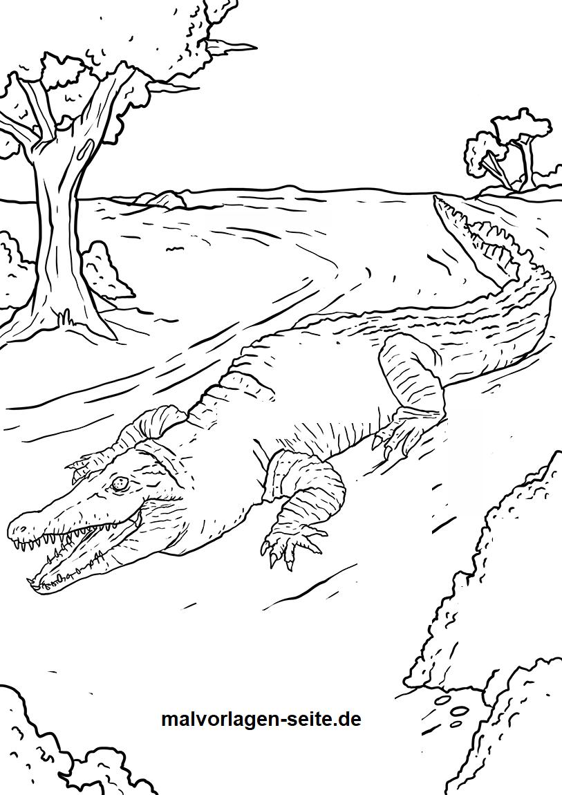 malvorlage krokodil  tiere  ausmalbilder kostenlos innen