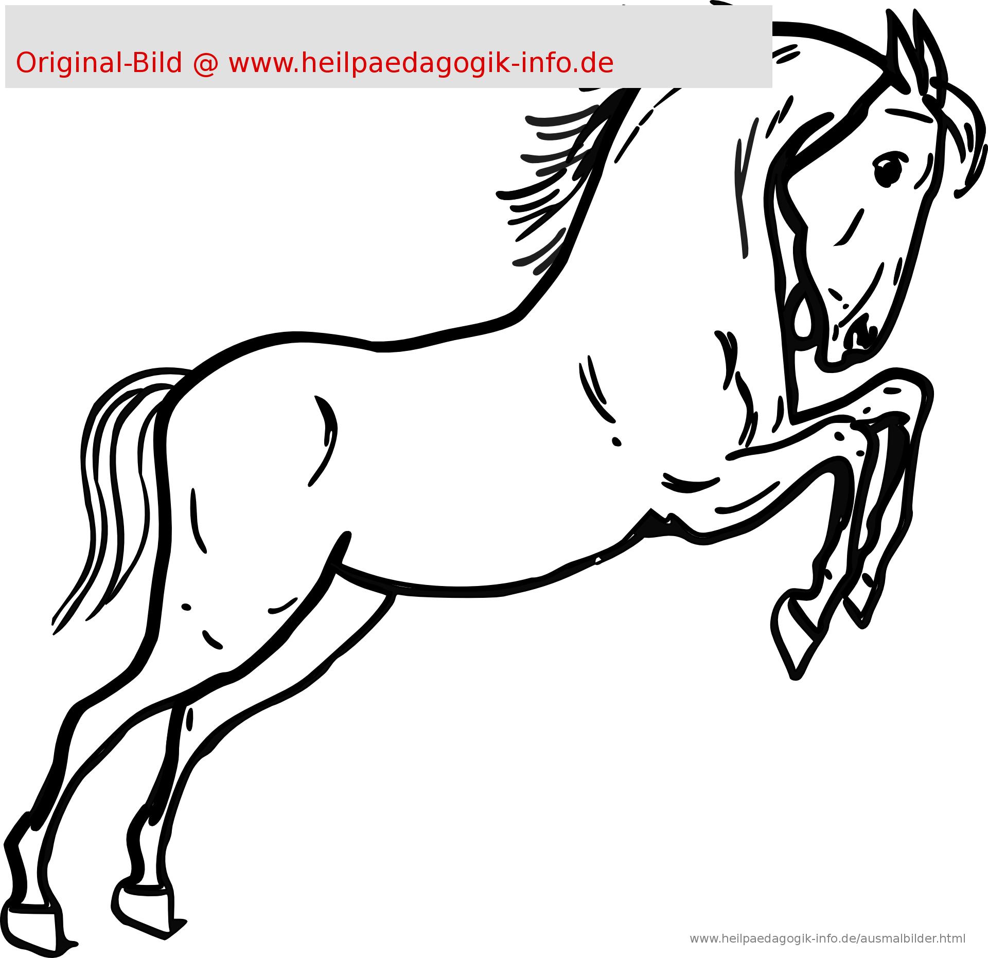 Malvorlage Pferdekopf Einfach | Coloring And Malvorlagan bestimmt für Malvorlage Pferdekopf