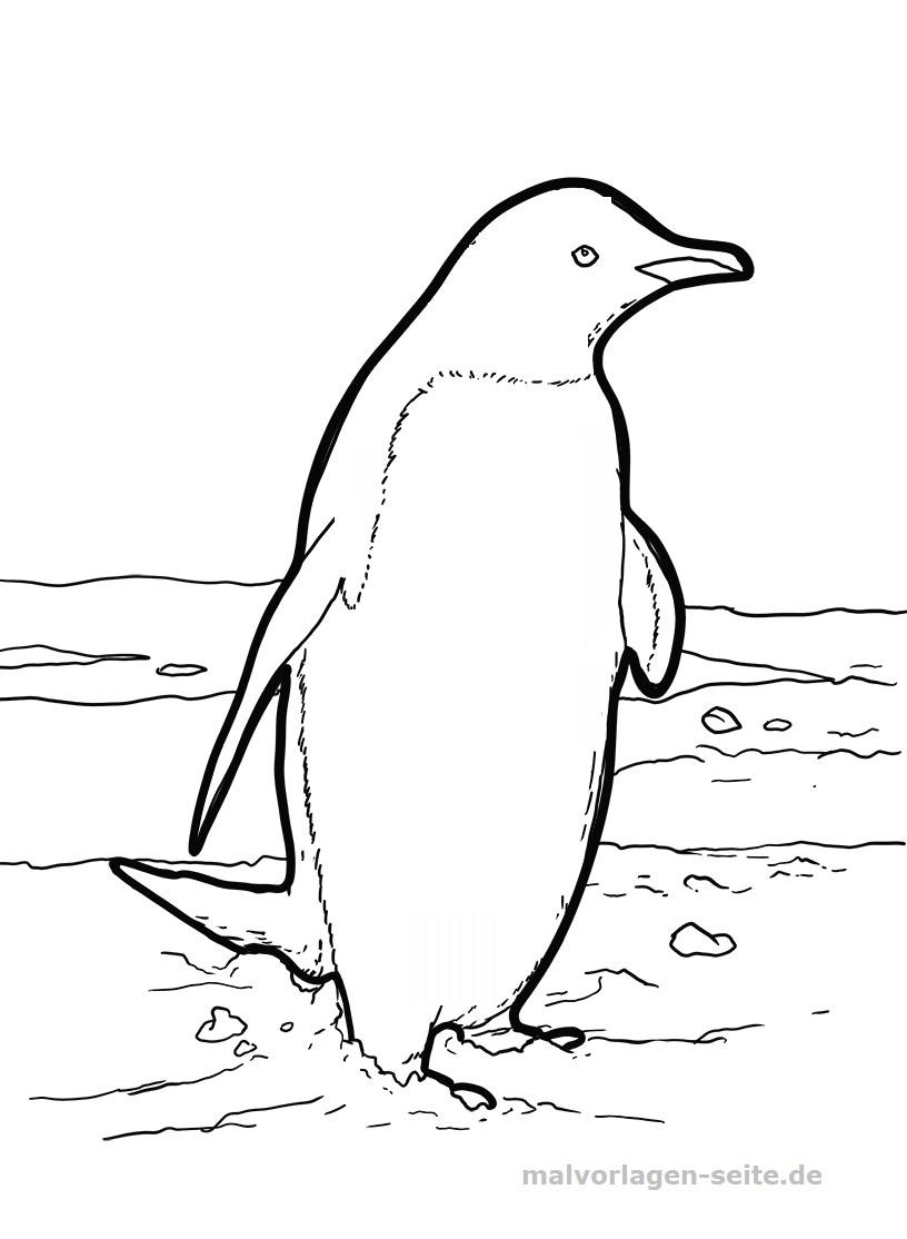 Malvorlage Pinguin | Tiere - Ausmalbilder Kostenlos innen Pinguin Malvorlage