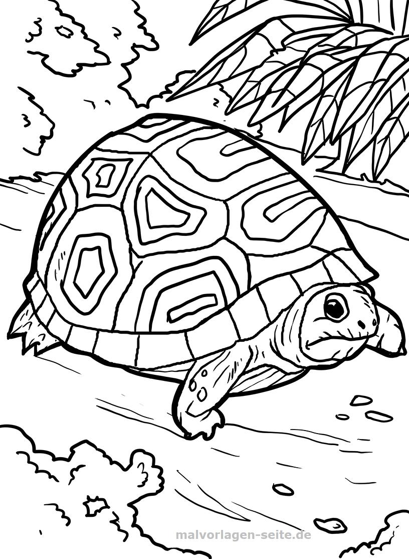 Malvorlage Schildkröte   Tiere - Ausmalbilder Kostenlos für Malvorlage Schildkröte
