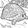 Malvorlage Schildkröte | Tiere - Ausmalbilder Kostenlos innen Schildkröte Ausmalbild