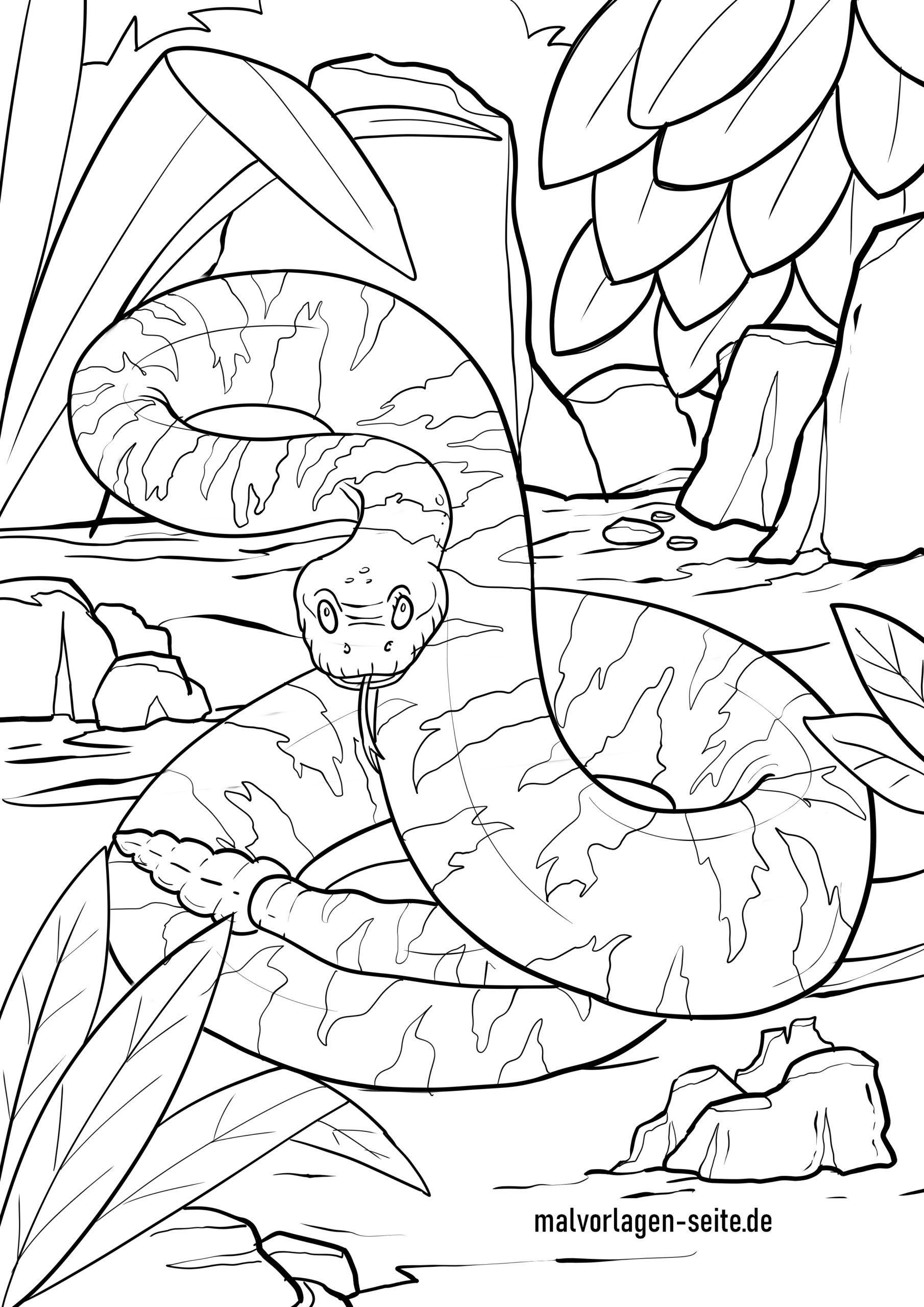 Malvorlage Schlange - Klapperschlange - Ausmalbilder in Schlangen Ausmalbilder