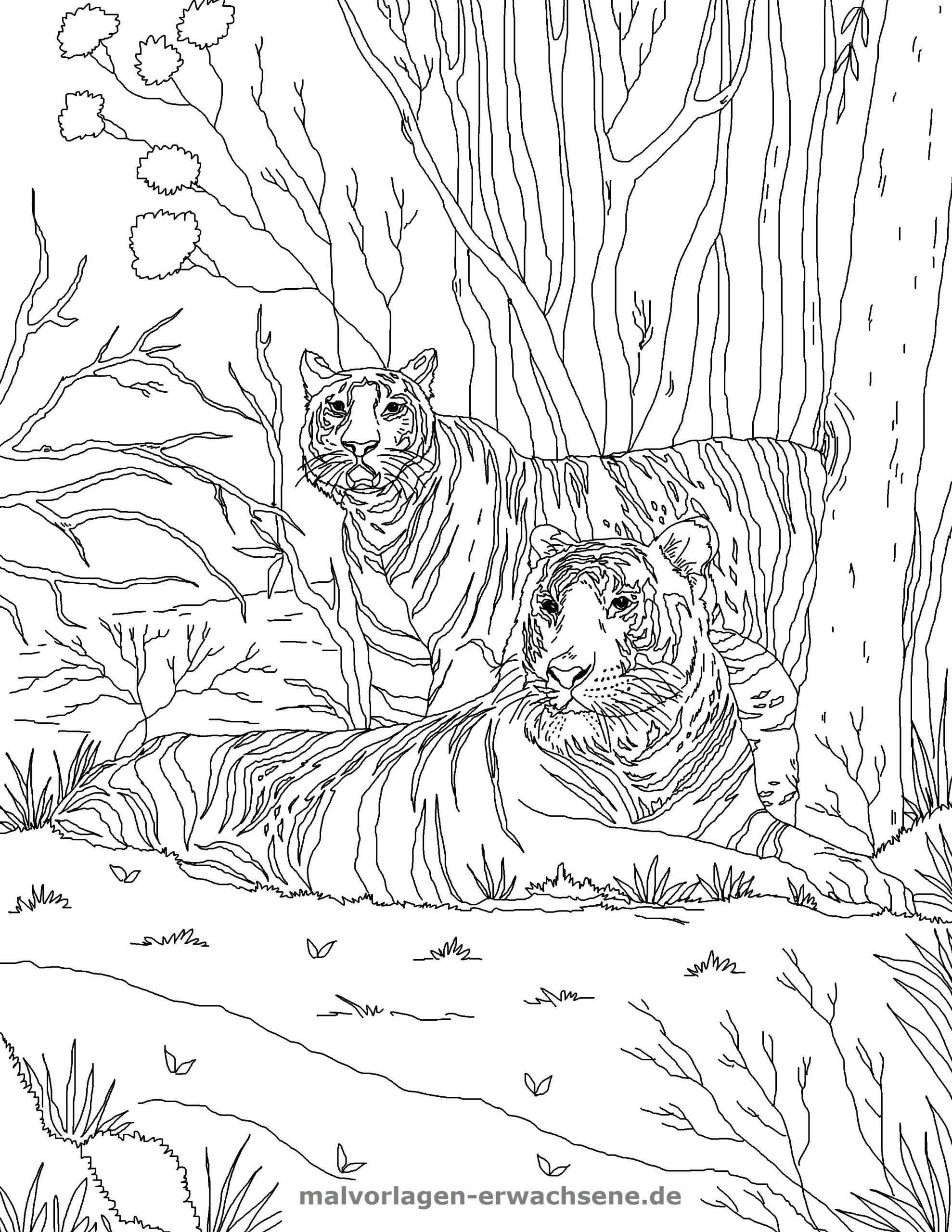 Malvorlage Tiger   Tiere - Ausmalbilder Kostenlos Herunterladen über Tiger Malvorlage