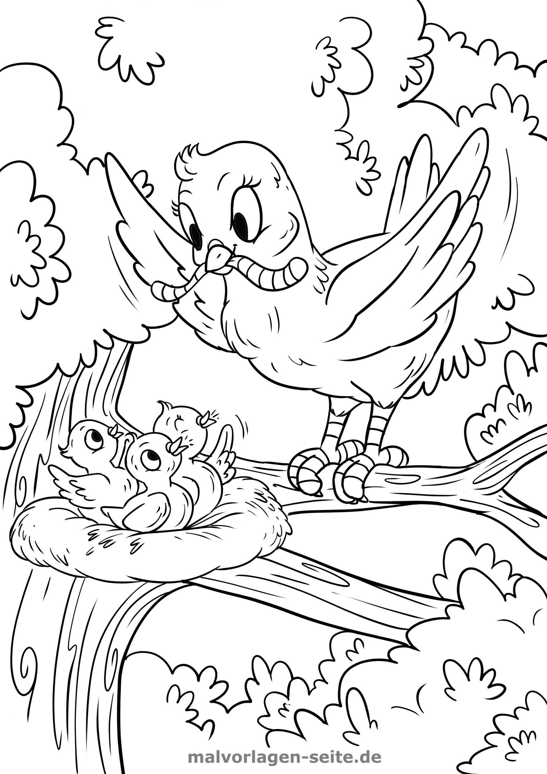 Malvorlage Vogel Füttert Ihre Jungen - Ausmalbilder innen Vogel Zum Ausmalen