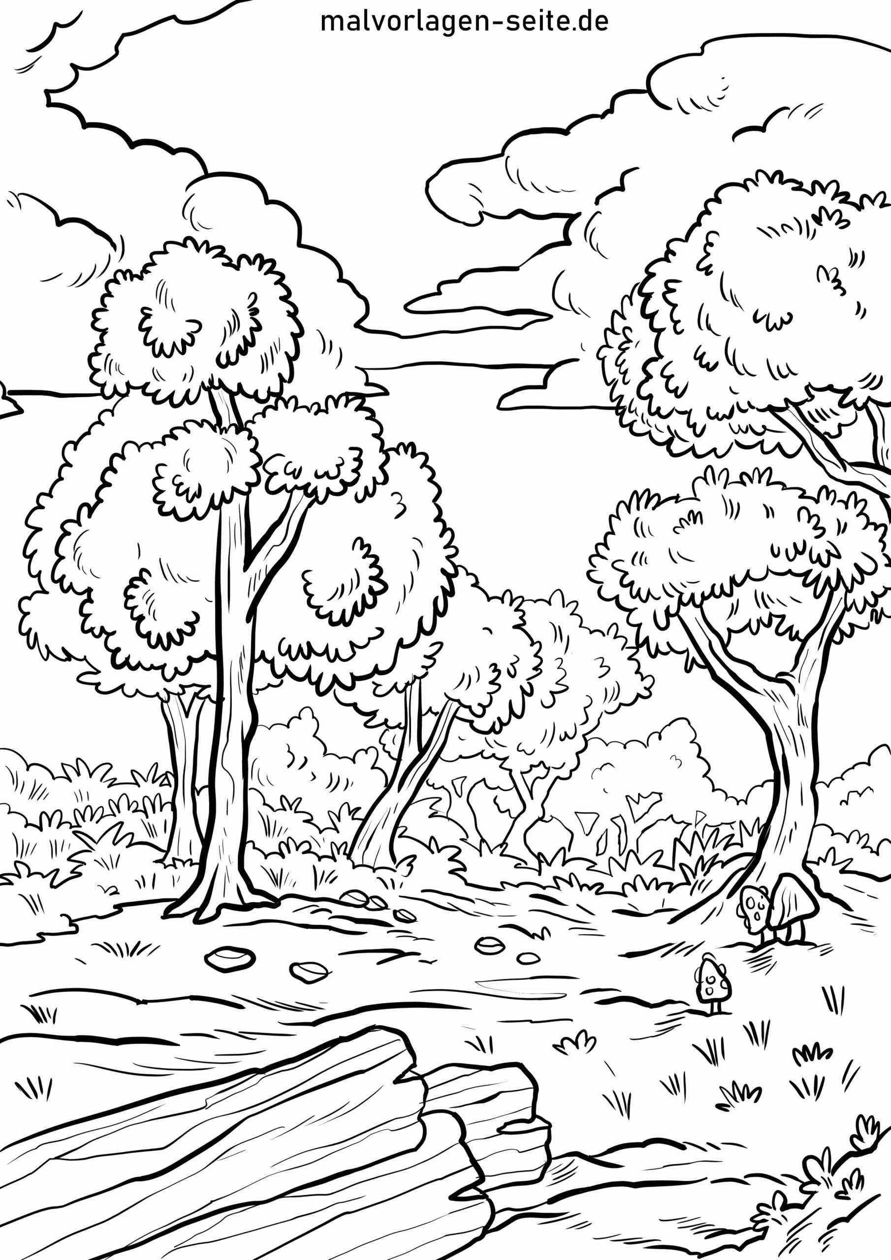 Malvorlage Wald - Ausmalbilder Kostenlos Herunterladen über Wald Ausmalbild