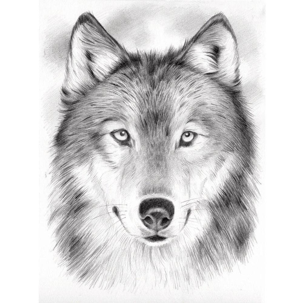 Malvorlage Wolf - Malvorlagen Für Kinder verwandt mit Ausmalbilder Wölfe Kostenlos