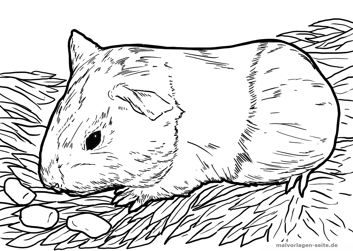 Malvorlagen Meerschweinchen | Coloring And Malvorlagan für Ausmalbilder Tiere Gratis