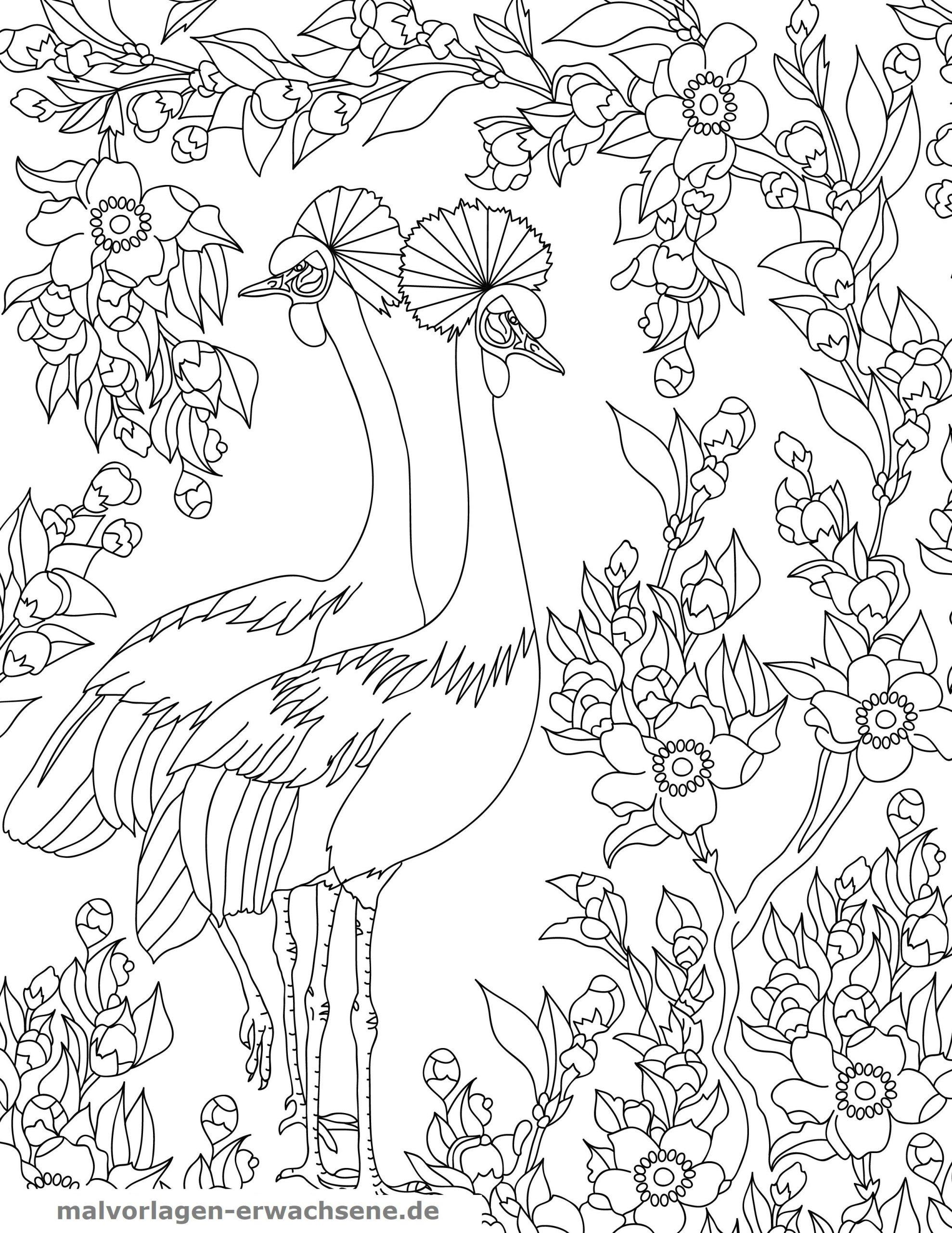 Malvorlagen Vögel Am Vogelhaus | Coloring And Malvorlagan über Fehlersuchbilder Zum Ausdrucken Gratis