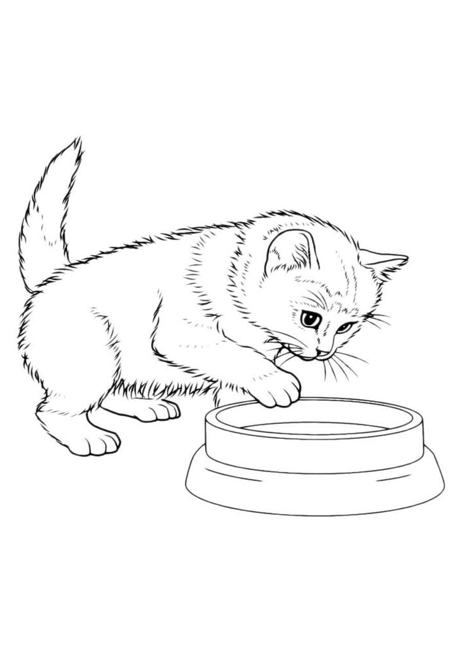 Malvorlagen Von Katzen. Drucken Sie 100 Kostenlose Schwarz ganzes Ausmalbilder Katzen Kostenlos