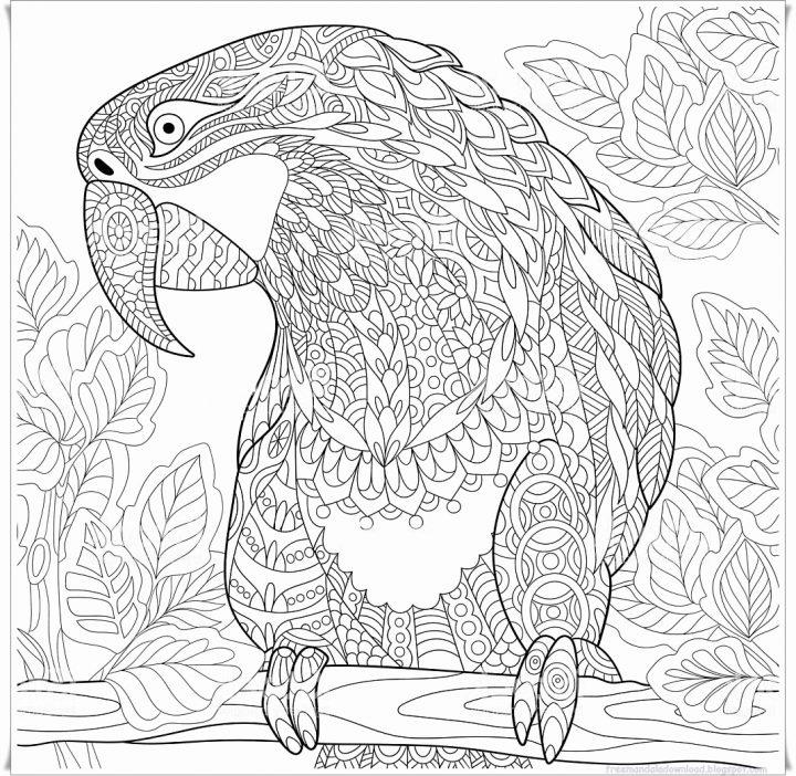 mandalas für erwachsene zum ausdrucken schön papagei