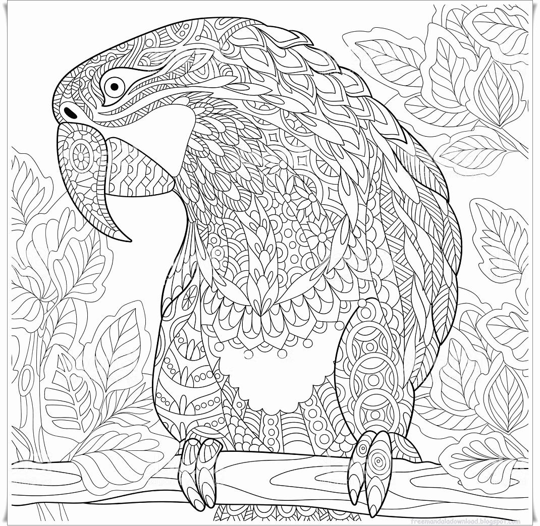 Mandalas Für Erwachsene Zum Ausdrucken Schön Papagei Mandala verwandt mit Mandala Ausmalbilder