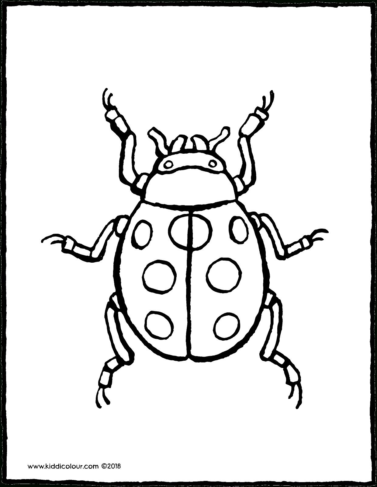Marienkäfer - Kiddimalseite verwandt mit Malvorlage Marienkäfer