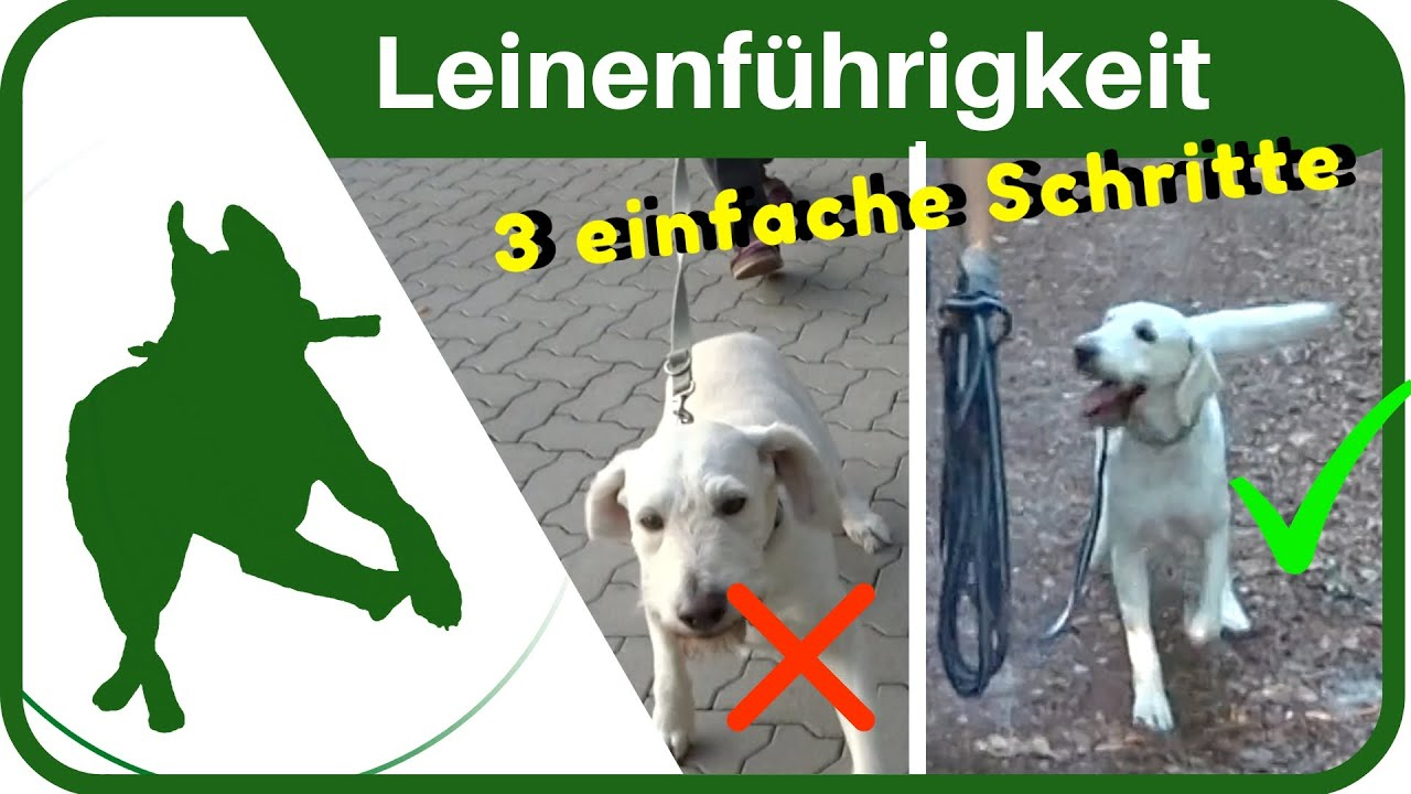 Mein Hund Zieht An Der Leine, Was Tun?! - Petlindo ganzes Hund Zieht Stark An Der Leine Was Tun