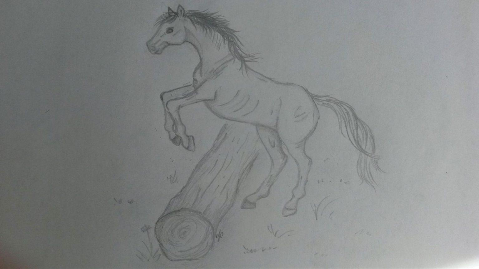 steigendes pferd zeichnen  kinderbilderdownload