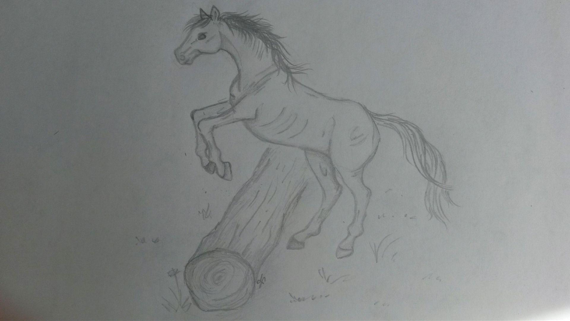 Meine Zeichnungen - Zeichnung - Pferd, Springend - Wattpad bestimmt für Steigendes Pferd Zeichnen