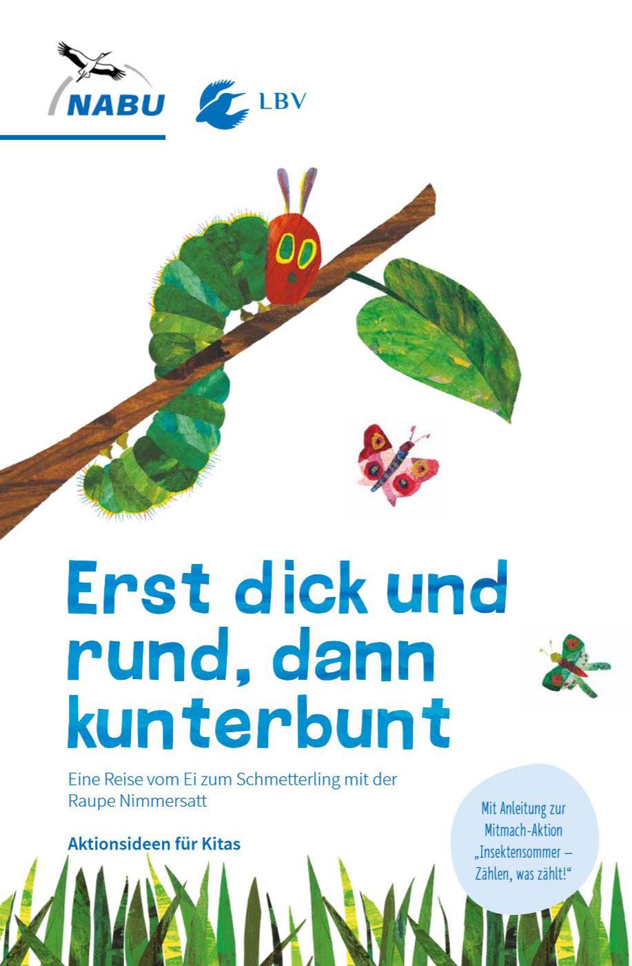 Von Der Raupe Zum Schmetterling Kindergarten