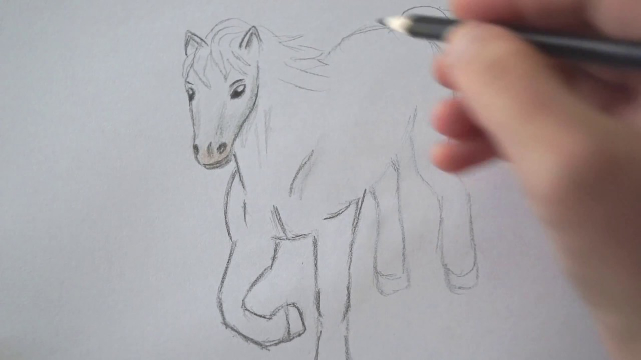Pferd Zeichnen bei Pferde Zeichnen Lernen Für Anfänger