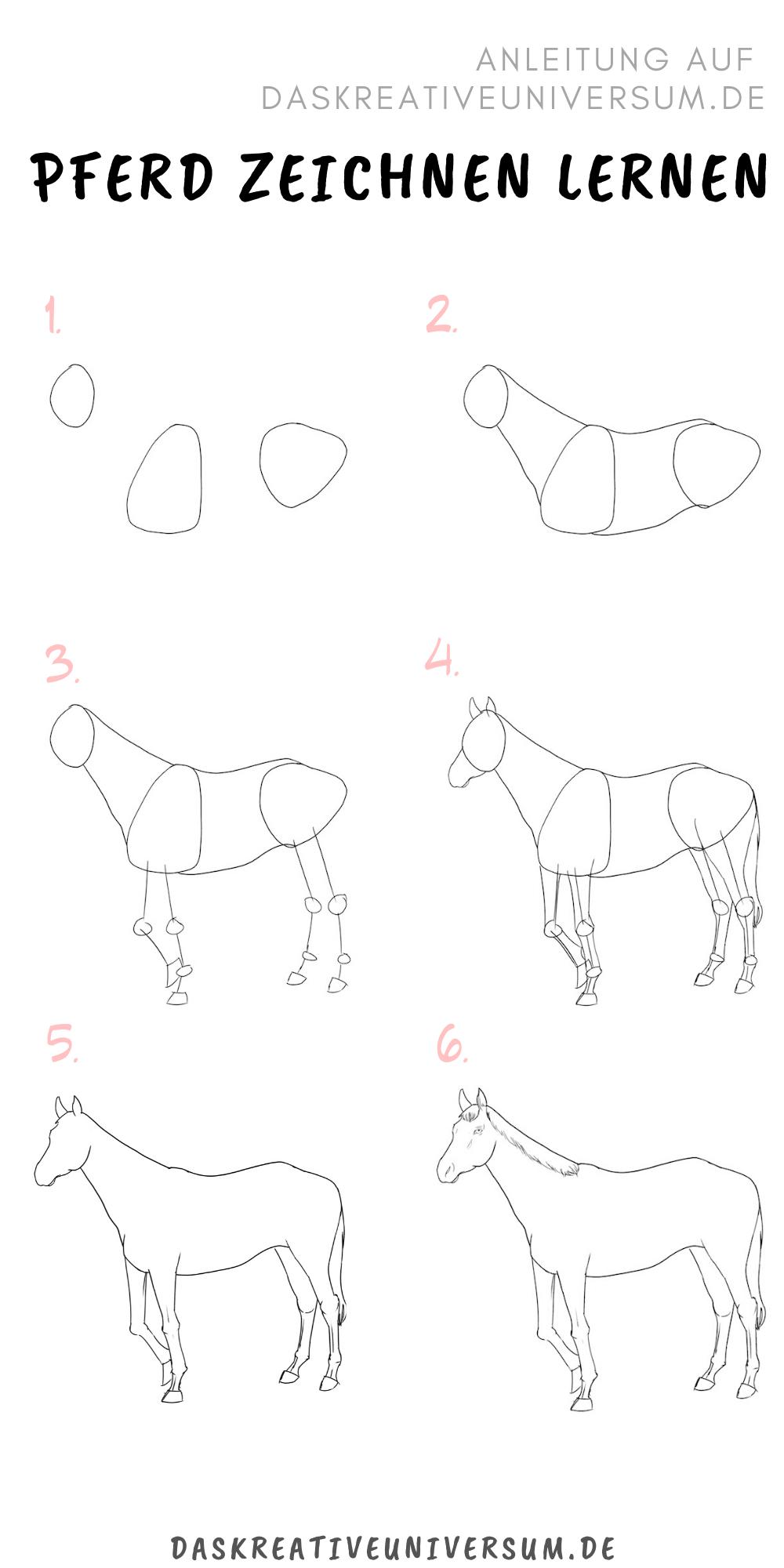 Pferd Zeichnen Lernen - 7 Schritte Für Ein Anatomisch bestimmt für Pferde Zeichnen Lernen