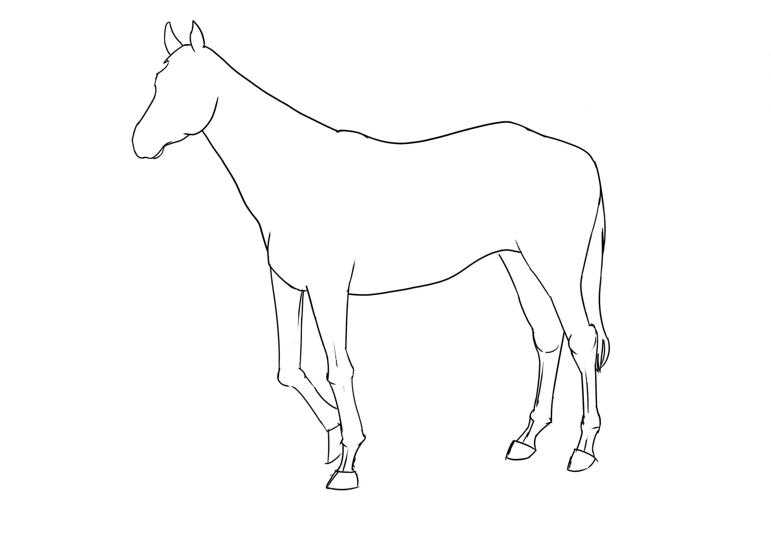 Pferd Zeichnen Lernen - 7 Schritte Für Ein Anatomisch ganzes Pferde Zeichnen Lernen