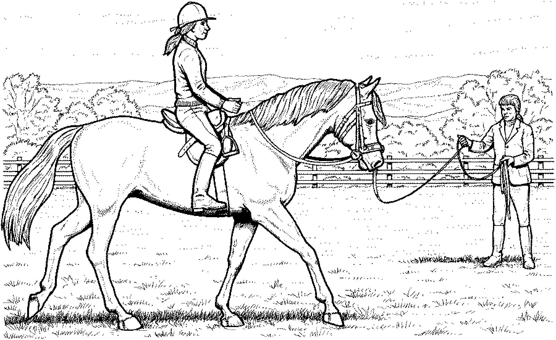 ausmalbilder pferde im stall  kinderbilderdownload
