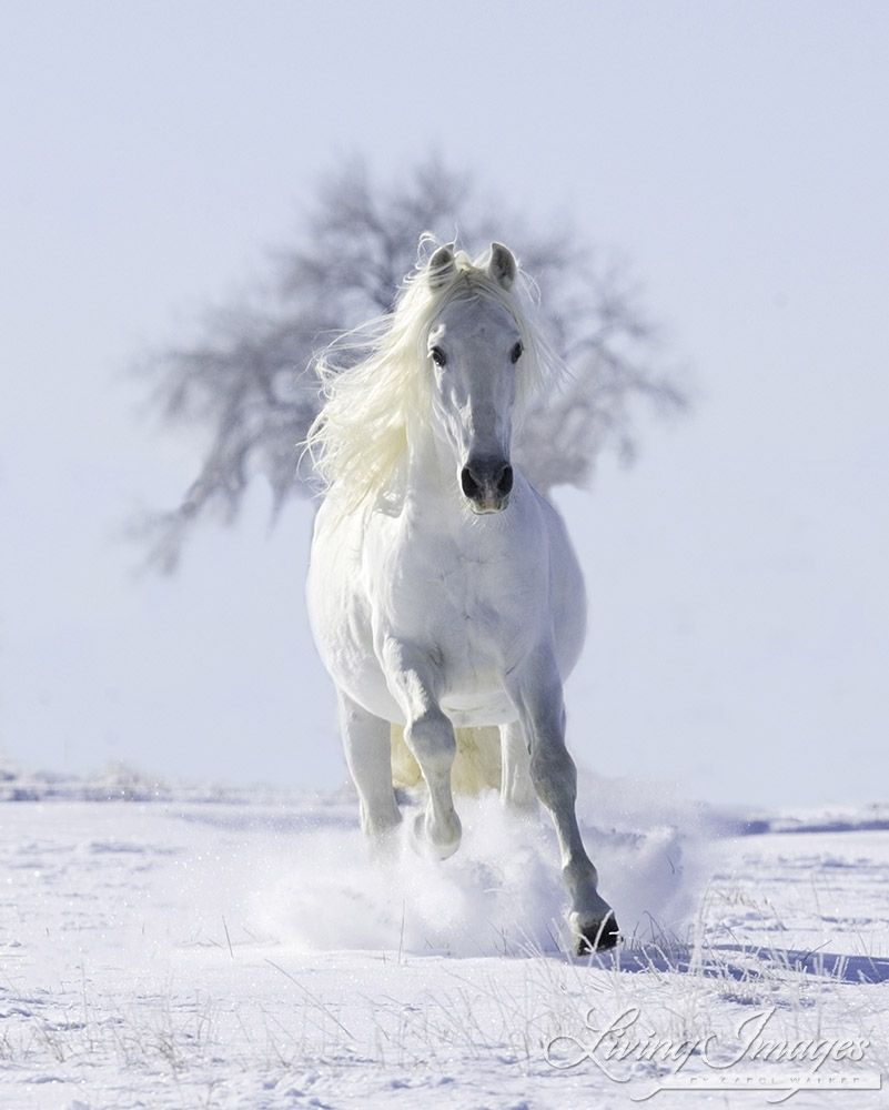 Pferde Weihnachtsbilder Kostenlos Herunterladen | Bilder Und in Pferde Bilder Kostenlos Herunterladen