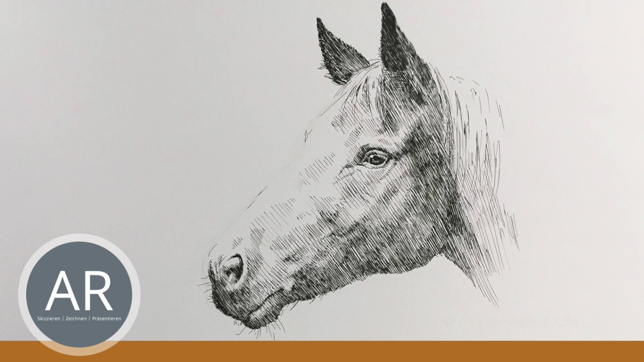 Pferde Zeichnen Lernen. Pferdekopf Malen. Mappenkurs Kunst Auf Lehramt. bestimmt für Pferdekopf Malen