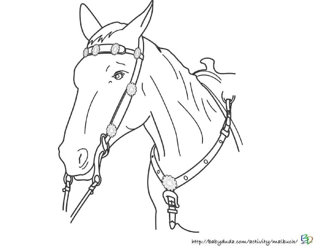 Pferdebilder Ausmalen: Pferdeköpfe Ausmalbilder | Babyduda in Malvorlage Pferdekopf