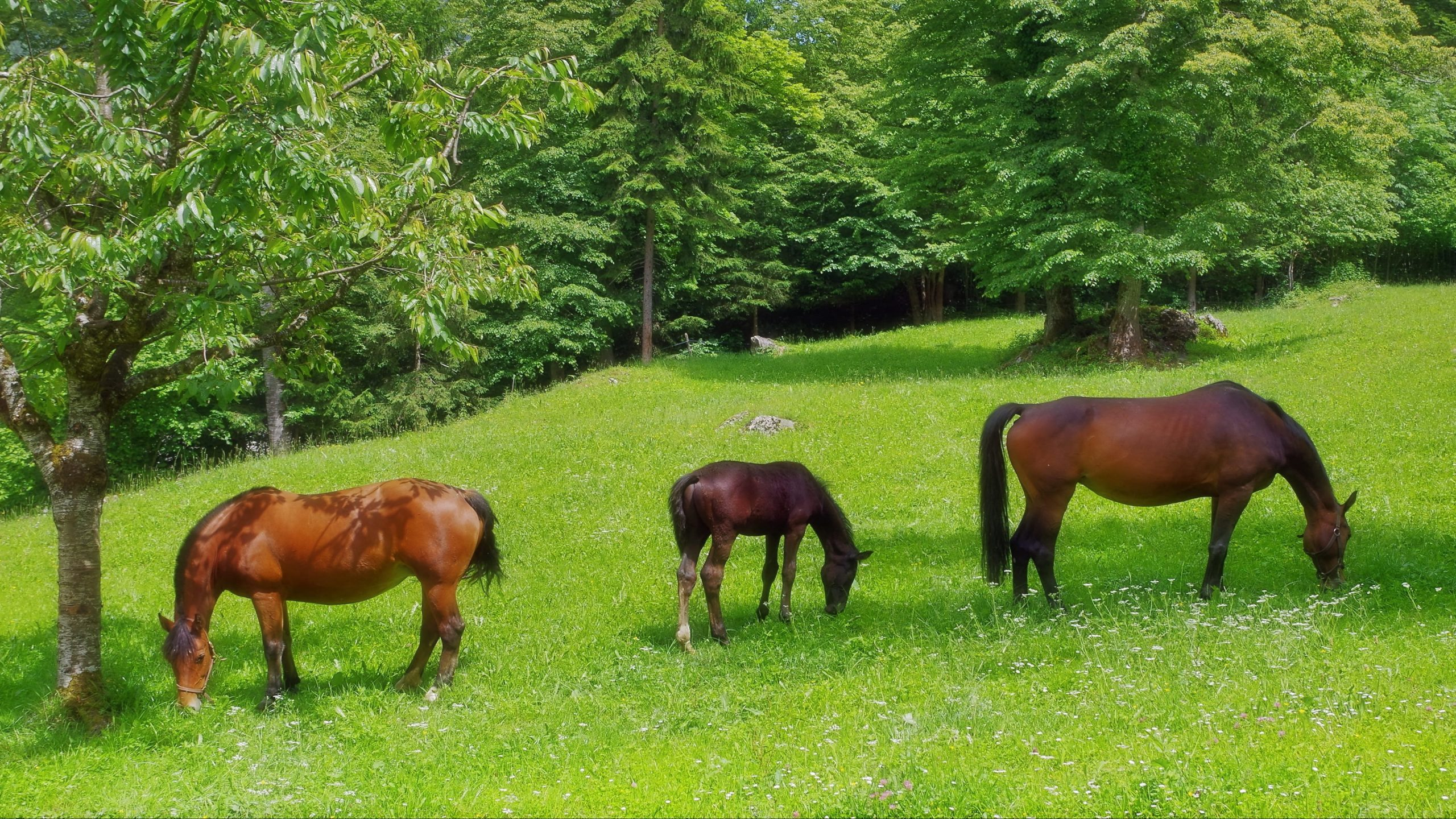Pferdebilder Kostenlos Ausdrucken mit Pferdebilder Zum Ausdrucken Gratis