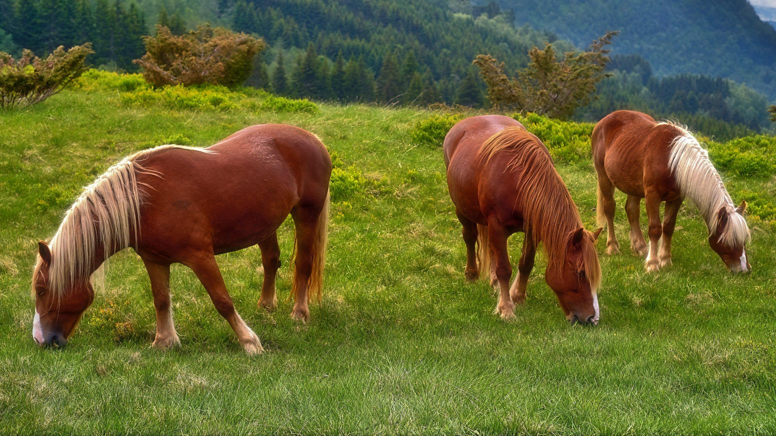 Pferdebilder Kostenlos Runterladen bestimmt für Pferde Bilder Kostenlos Herunterladen