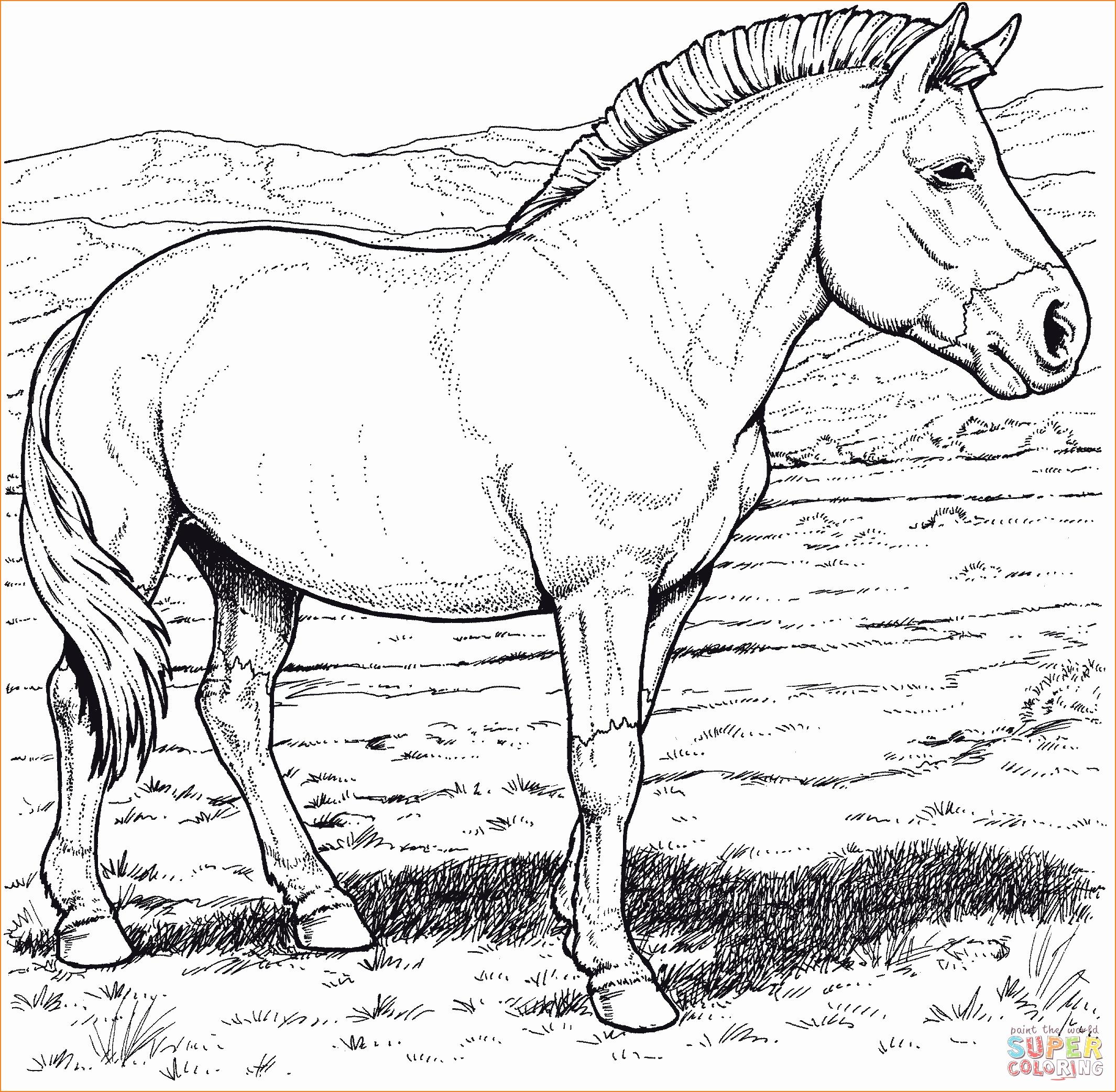 Pferdebilder Zum Ausdrucken Schön 44 Frisch Bilder verwandt mit Pferdebilder Zum Ausdrucken Gratis